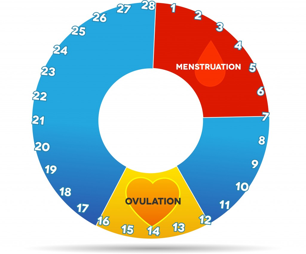 When Does A Woman Ovulate 113