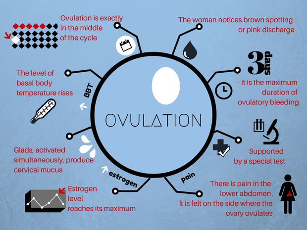 Facts about ovulation